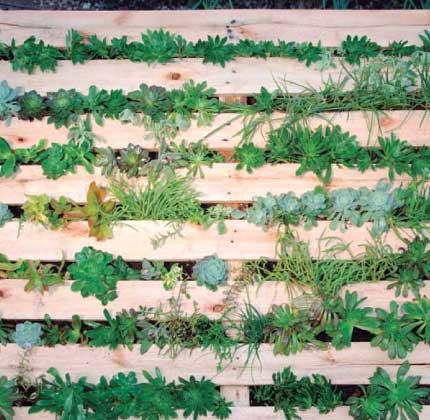Paso a paso c mo transformar un palet en un jardin vertical decoraci n dise o inspiraci n - Jardines verticales paso a paso ...